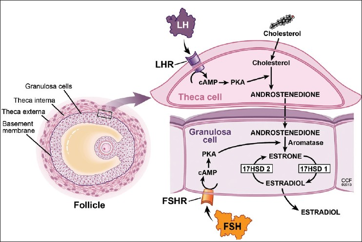 steroid hormone mediated signaling pathway